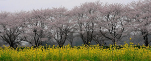 2012_0411_164741dsc_48401b1