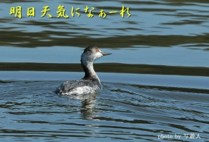 Dsc_69021b1photo-by