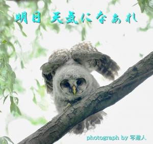 Dsc_37951b1-photograph-by